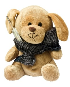 teddy-242878_640 (2)