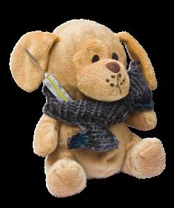 teddy-242885_960_720